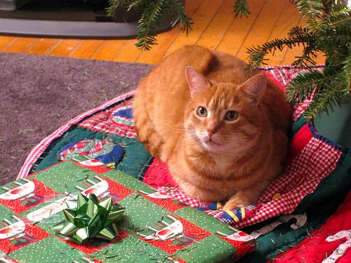 Dexter waits for Santa