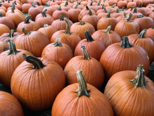 Despite the dry weather this year, there was a bumper crop of pumpkins.